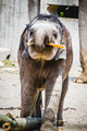 africa safari, baby elephant playing with a log of wood - PhotoDune Item for Sale