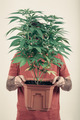 Man holding Cannabis pot - PhotoDune Item for Sale