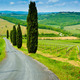Vineyard Hills and Cypresses - PhotoDune Item for Sale