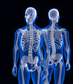 Human skeleton close up. Front and back view. Contains clipping path - PhotoDune Item for Sale