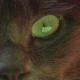 Cut Cat  - VideoHive Item for Sale
