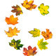 Letter G composed of autumn maple leafs - PhotoDune Item for Sale