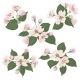 Apple Tree Flowers - GraphicRiver Item for Sale