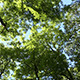 Forest - In The Treetops - Canopy