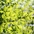 Green leaves on a sunny day as a backdrop. - PhotoDune Item for Sale