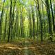 Spring green forest and blue sky. Landscape. - PhotoDune Item for Sale
