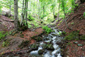 Mountain forest stream in spring. - PhotoDune Item for Sale