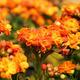 desert plant. - PhotoDune Item for Sale