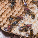 Paper wasp - PhotoDune Item for Sale