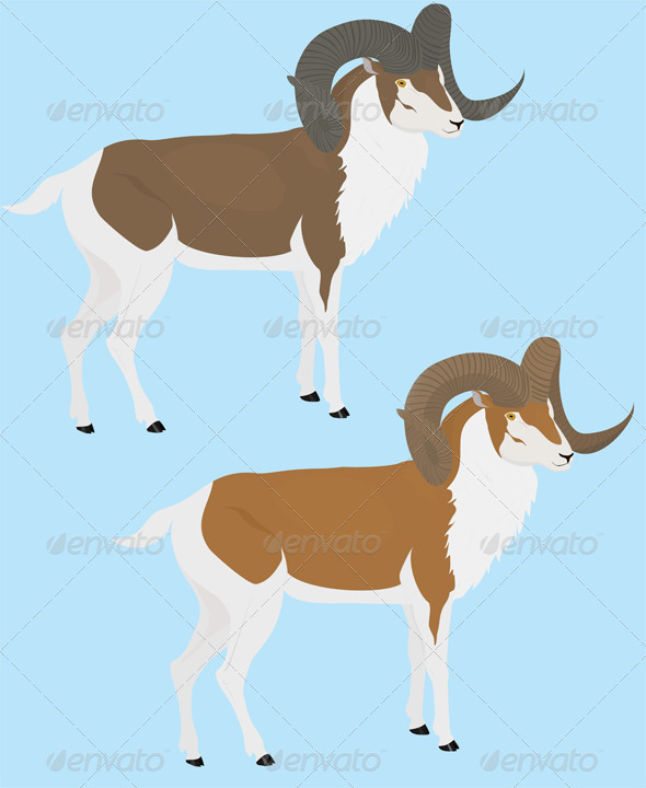 GraphicRiver Long Horn Goat 8548916