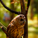 Bird Owl 2 - VideoHive Item for Sale