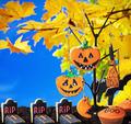 Halloween cookies hanging on a tree - PhotoDune Item for Sale