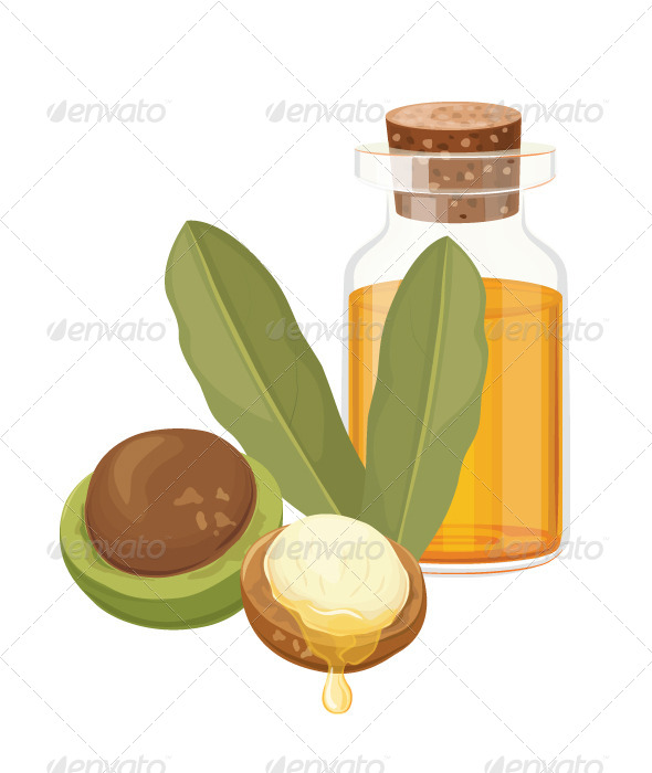 Macadamia Oil Vector Illustration