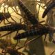 Grasshopper - VideoHive Item for Sale