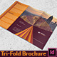 Corporate Agency Brochure - GraphicRiver Item for Sale