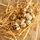quail eggs - PhotoDune Item for Sale