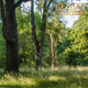 Forest Wilderness - VideoHive Item for Sale