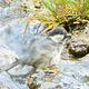Bird is Taking a Bath - VideoHive Item for Sale