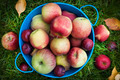 Fresh apples harvest - PhotoDune Item for Sale