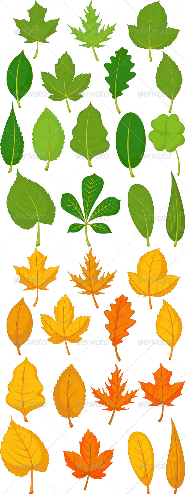 GraphicRiver Leaves Set Green and Autumn Leaves 8565407