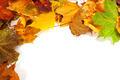 Autumn maple-leafs - PhotoDune Item for Sale