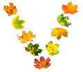 Letter V composed of autumn maple leafs - PhotoDune Item for Sale