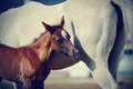 Foal with a mare. - PhotoDune Item for Sale