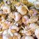 Garlic at the market - PhotoDune Item for Sale