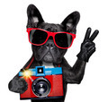 dog photographer - PhotoDune Item for Sale