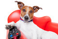 dog tv - PhotoDune Item for Sale