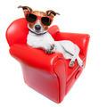 dog sofa - PhotoDune Item for Sale