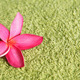 Frangipani on green towel - PhotoDune Item for Sale