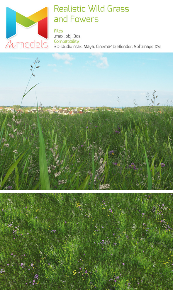 Realistic wild grass and flowers