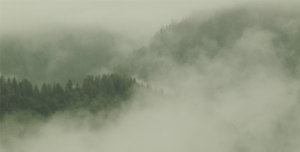 Fog moving over Trees and Landscape