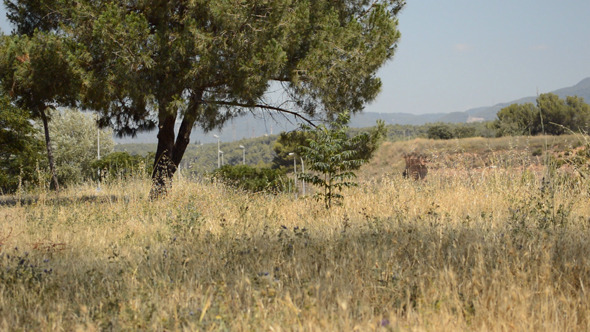 Small Tree in a Dry Field