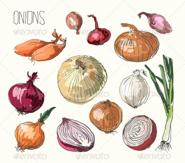 GraphicRiver Onion Set 8586478