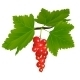 Redcurrant - GraphicRiver Item for Sale