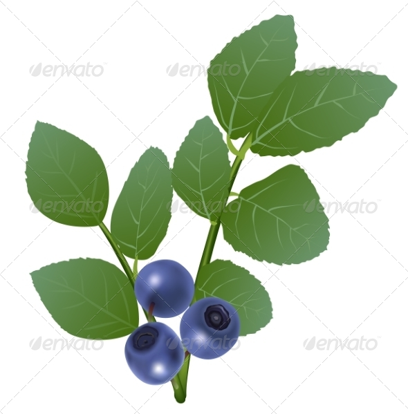 GraphicRiver Blueberry 8588073