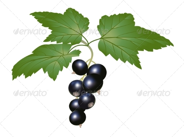 GraphicRiver Blackcurrant 8588074
