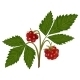 Arctic Bramble - GraphicRiver Item for Sale