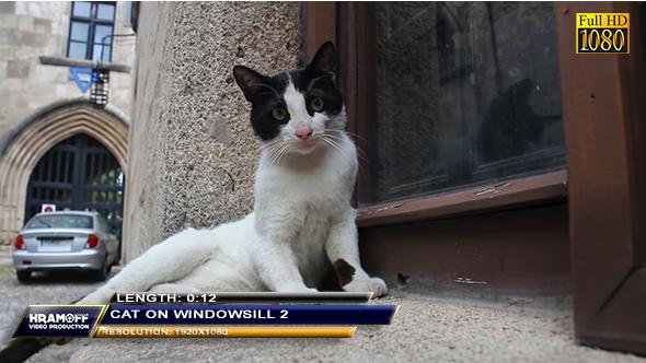Cat On Windowsill 2