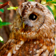 Bird Owl 5 - VideoHive Item for Sale