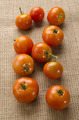 freshly harvested tomatoes from organic farming - PhotoDune Item for Sale