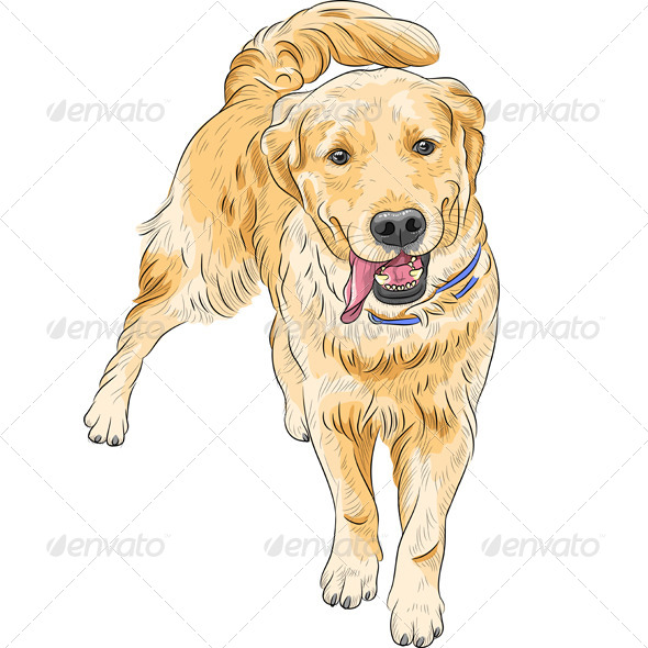 GraphicRiver Labrador Sketch 8603951