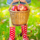 Kid holding basket with apples - PhotoDune Item for Sale