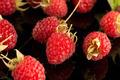 Fresh raspberries - PhotoDune Item for Sale