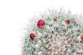 Cactus desert plant. - PhotoDune Item for Sale
