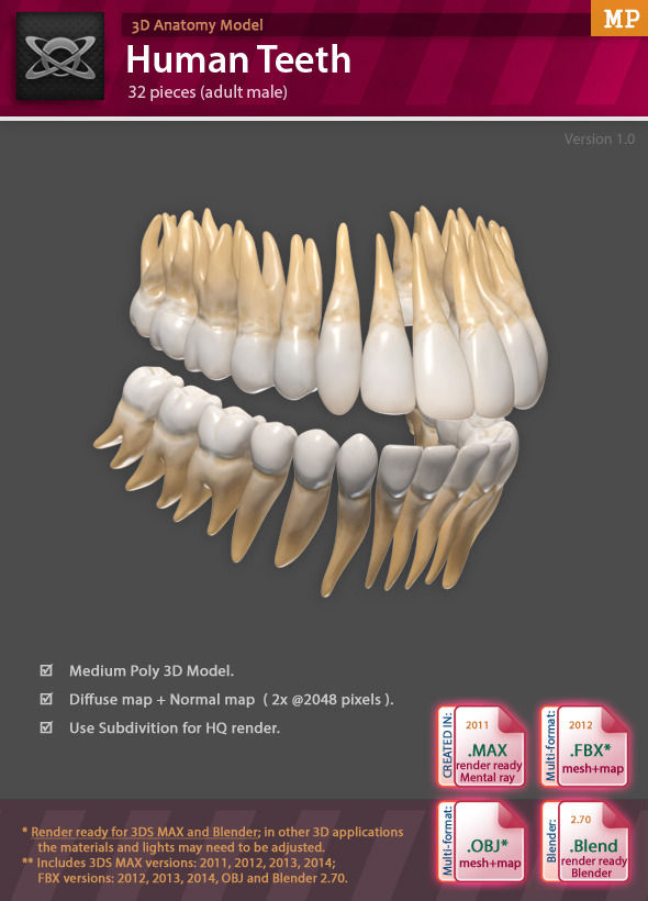 3DOcean 3D Anatomy Human Teeth 8608364