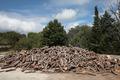 wood logs - PhotoDune Item for Sale