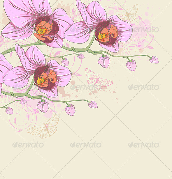 GraphicRiver Pink Orchids and Butterflies 8612004